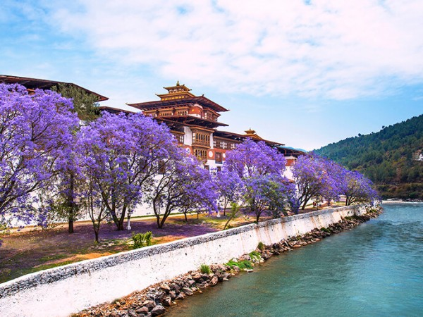Bhutan Tour for 8 days| One of the leading travel agency in nepal | Typical Nepal Travel.